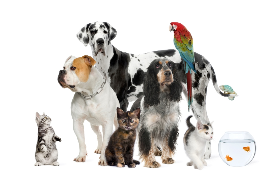 Group of pets standing against white background